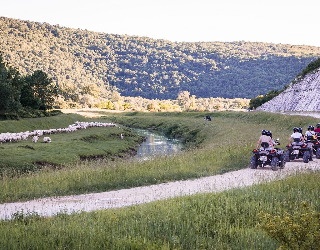 atv tour meeting a flock of sheeps